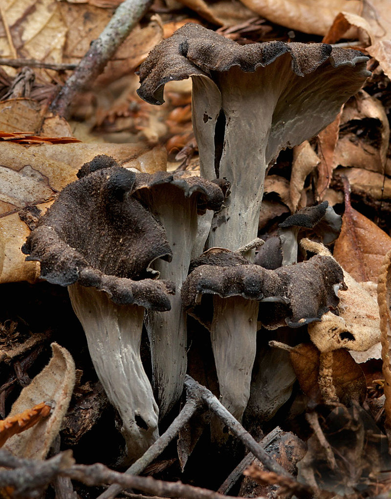 meteo funghi