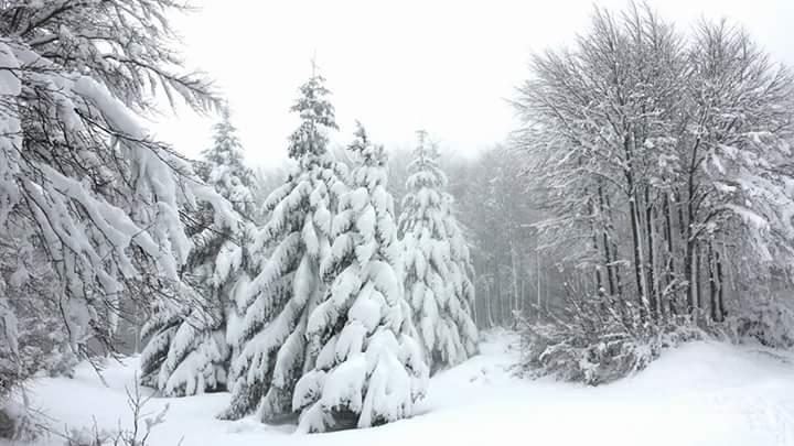 Capodanno al Gelo! Neve o secco?