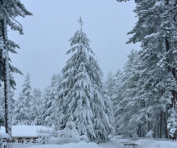 Dove nevicherà nel weekend? PRIME IPOTESI! Ed intanto per la prossima settimana....