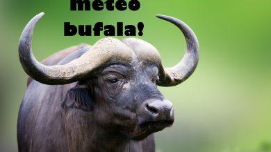 """FREDDO GLACIALE IN ARRIVO"": LE METEO-BUFALE spiegate in 10 PASSI"