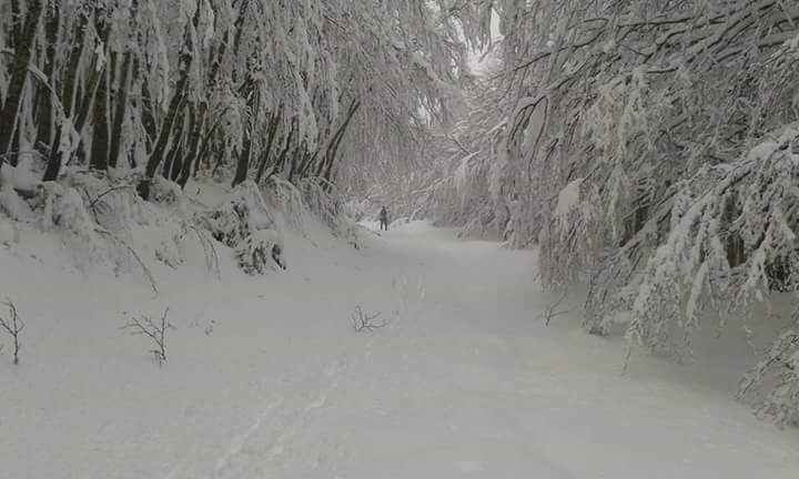 Gennaio si chiuderà col bel tempo, ma Febbraio potrebbe riportare l'inverno!!!