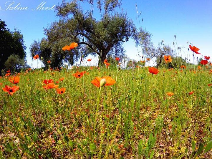 Sulla Calabria temperature in rialzo