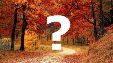 Che fine ha fatto l'autunno?