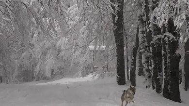 Previste nuove nevicate sui monti